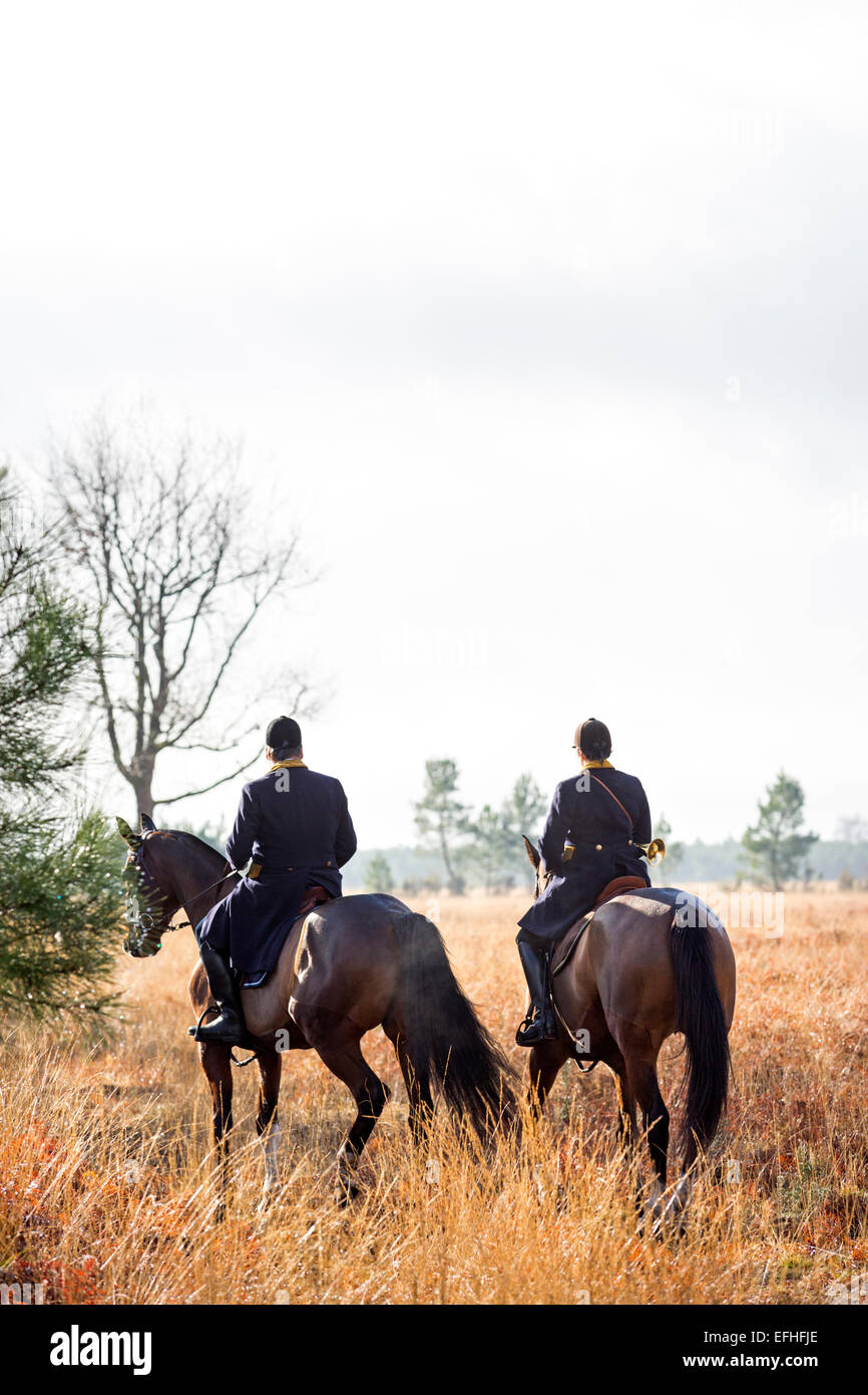 A pair of horse riders taking part in a deer hunting with hounds, in the Landes region (France). - Stock Image