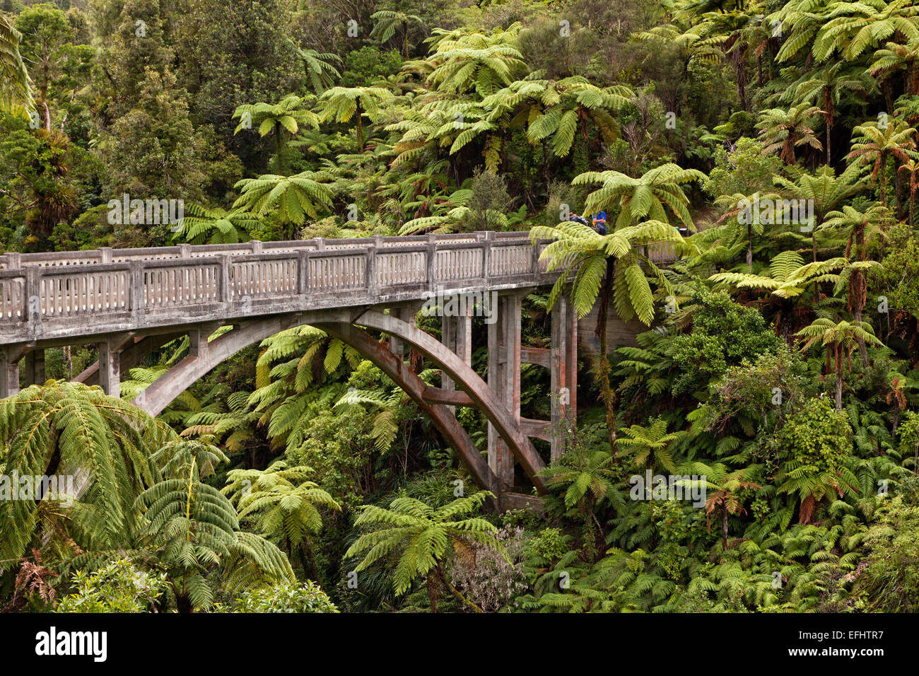 Bridge to Nowhere, a concrete road bridge with no road leading to it, tree ferns, walking track, Whanganui River, - Stock Image