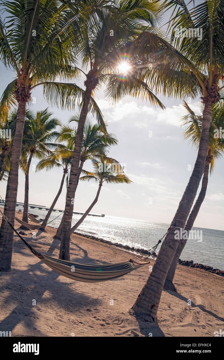 Beach area with hammock at luxury hotel Reach Resort, Key West, Florida Keys, USA - Stock Image