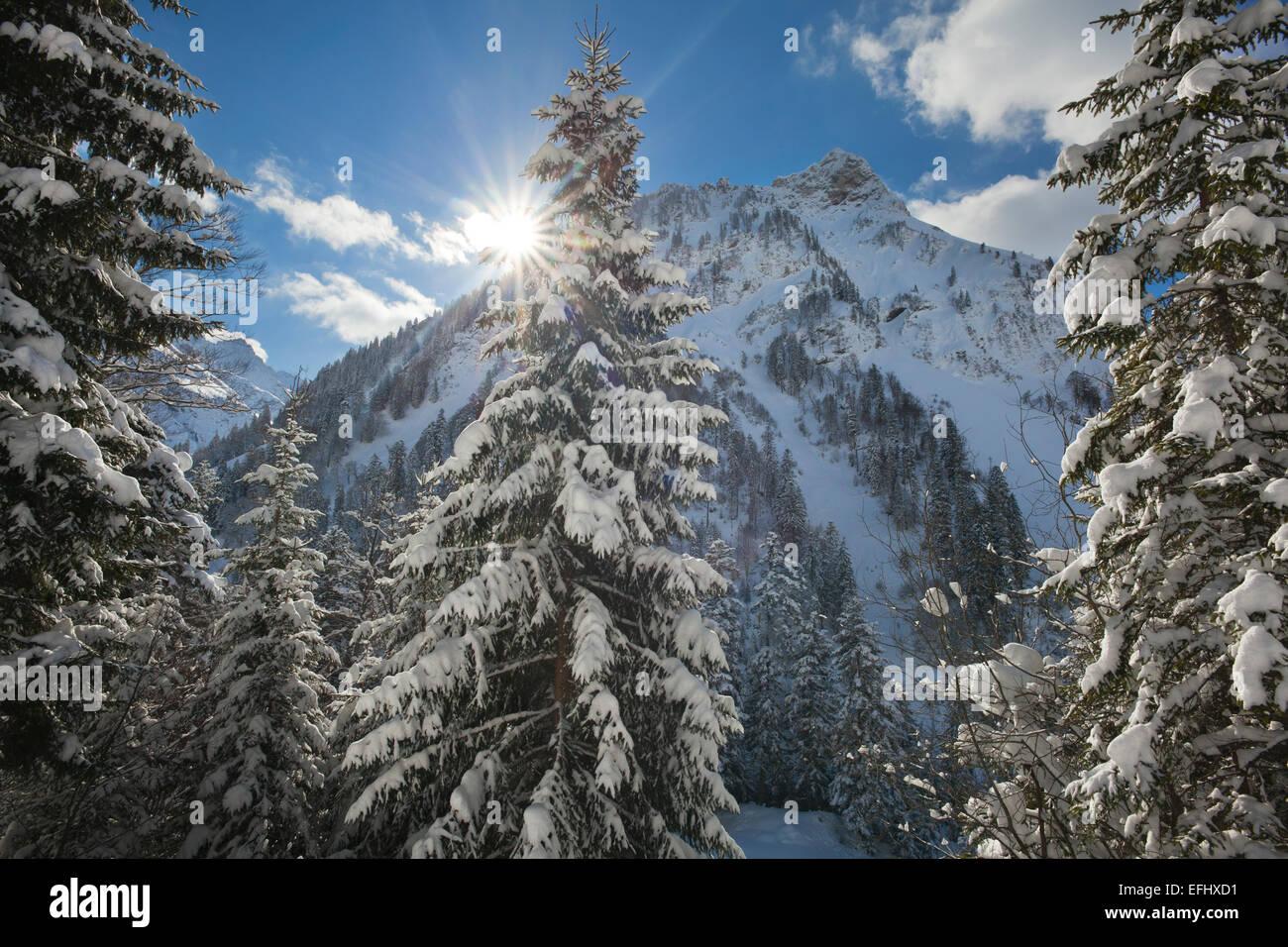 Winter landscape in Hintersteiner valley near Bad Hindelang, view to Giebel, Allgaeu, Bavaria, Germany - Stock Image