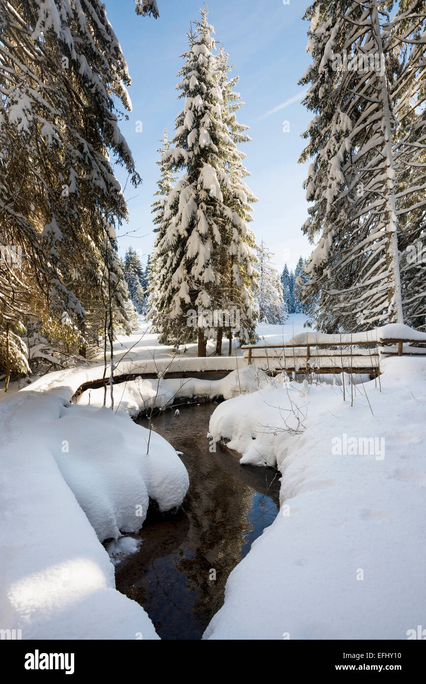 Snow covered trees and small stream, Bernau, Black Forest, Baden-Wuerttemberg, Germany - Stock Image