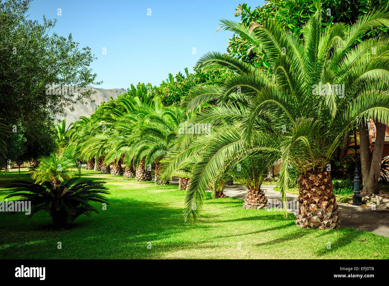 Walking alley with palms in Sicily at Sicily beach Stock Photo
