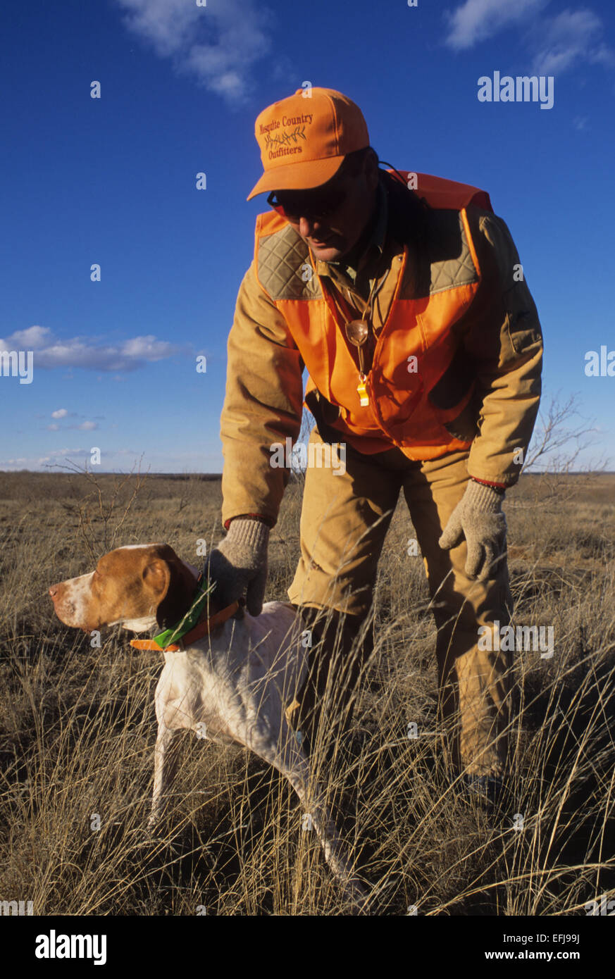 A hunter with his English Pointer dog while quail hunting near Guthrie Texas - Stock Image