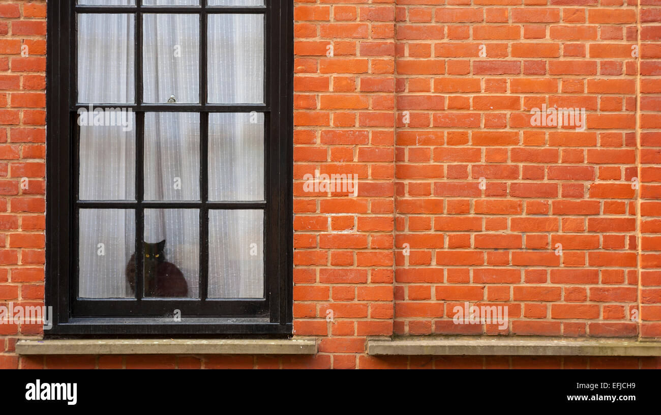 Cat in window of hose in Wilkes st Spitalfields Stock Photo