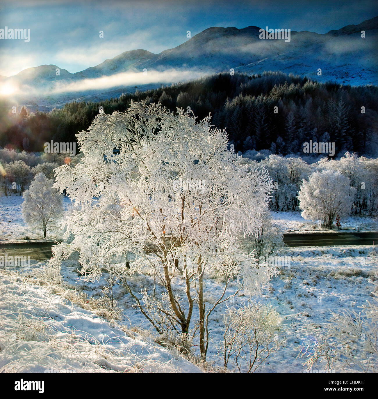 Frosty winter wonderland near Glenfinnan, Lochaber - Stock Image
