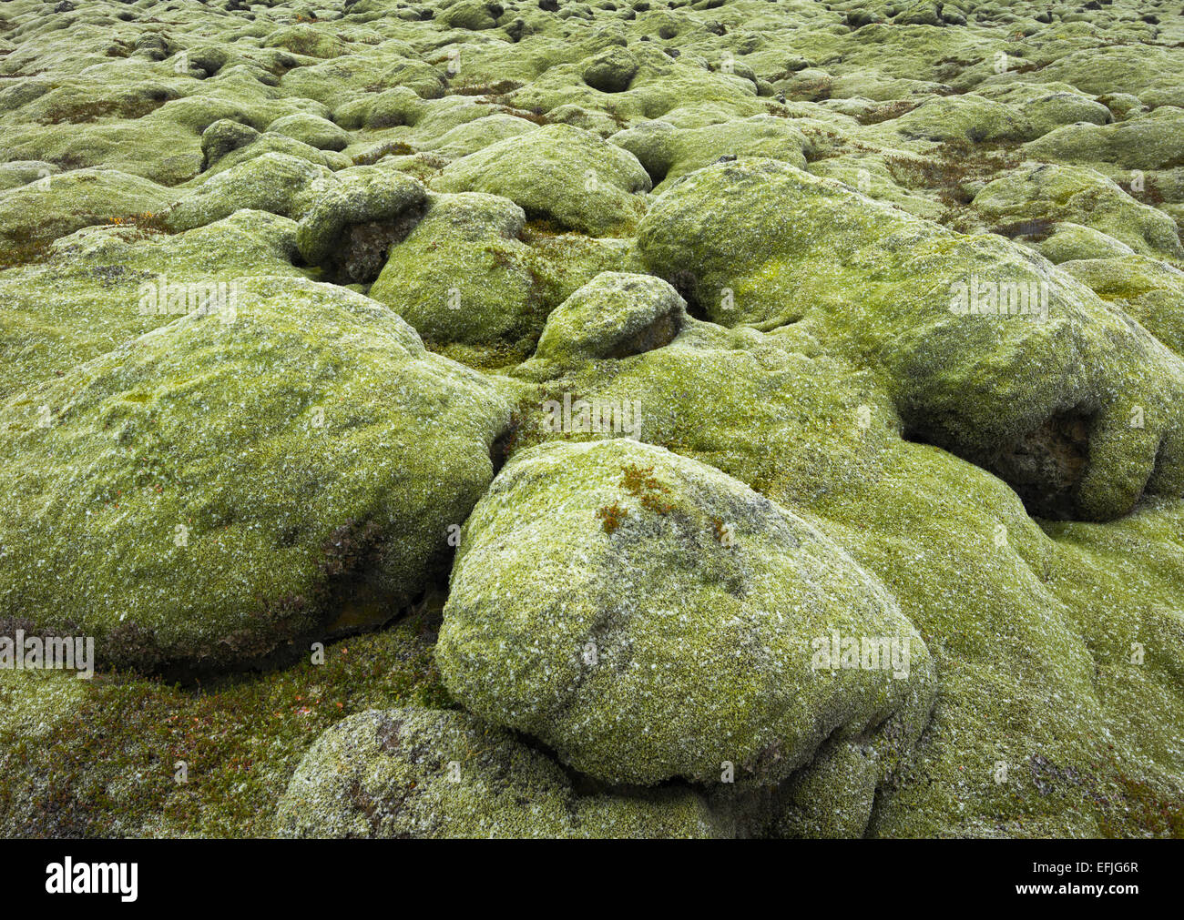 Moss covered stones, Eldhraun lava field, South Iceland, Iceland - Stock Image