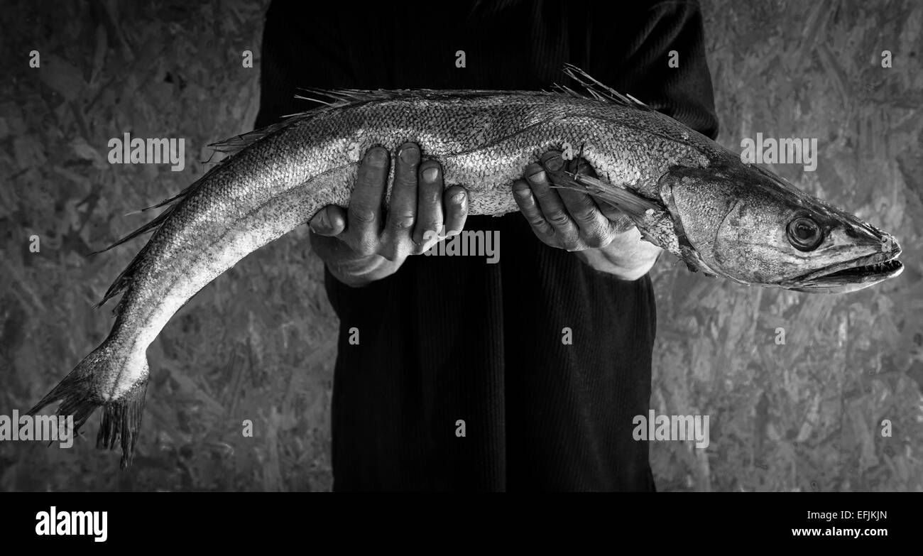 B/W image of a man's hands holding a large fresh hake (merluccius) - Stock Image