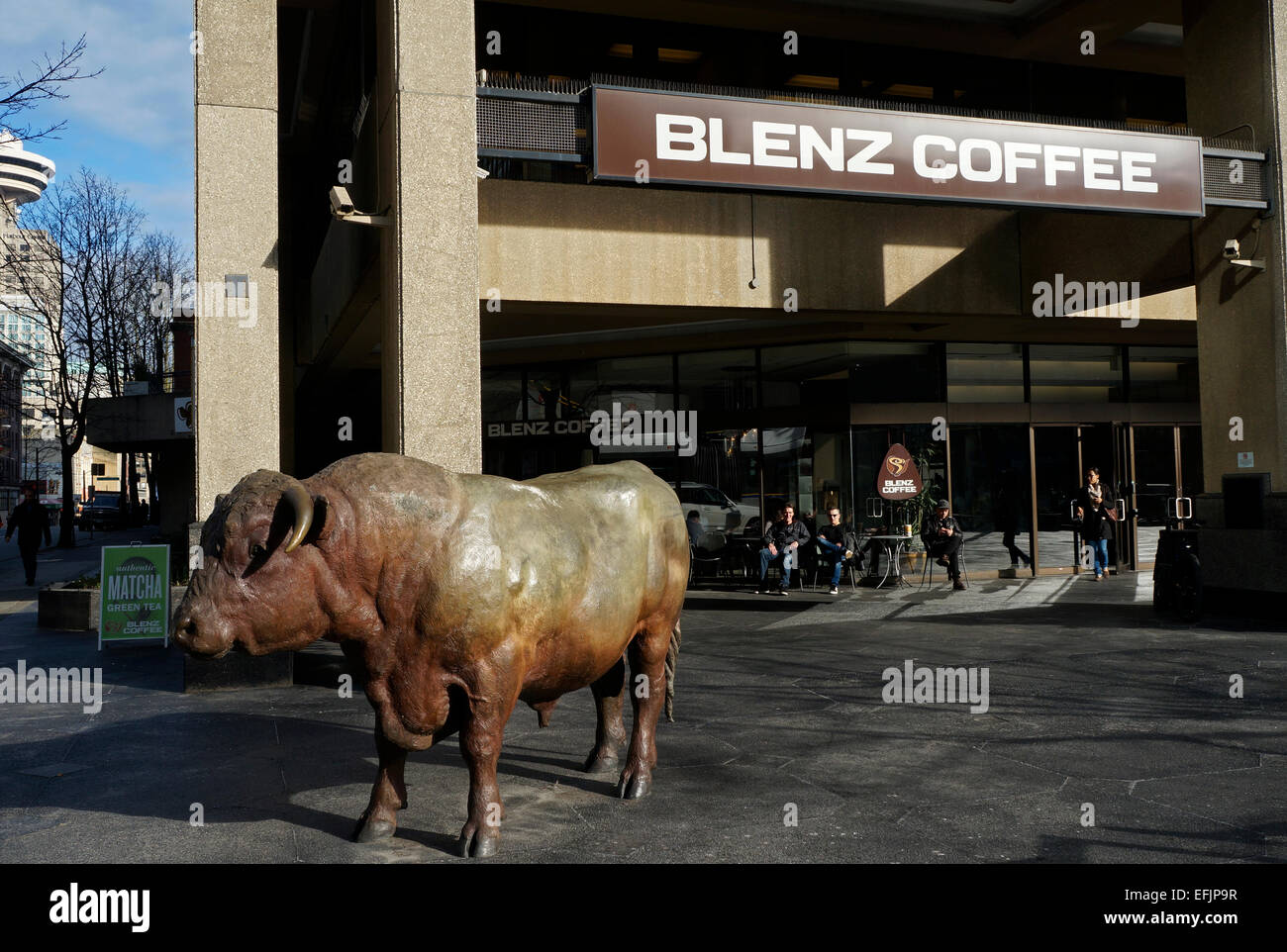 Bronze Royal Sweet Diamond bull sculpture by Joe Fafard outside Blenz Coffee shop on West Georgia, Vancouver, BC, - Stock Image