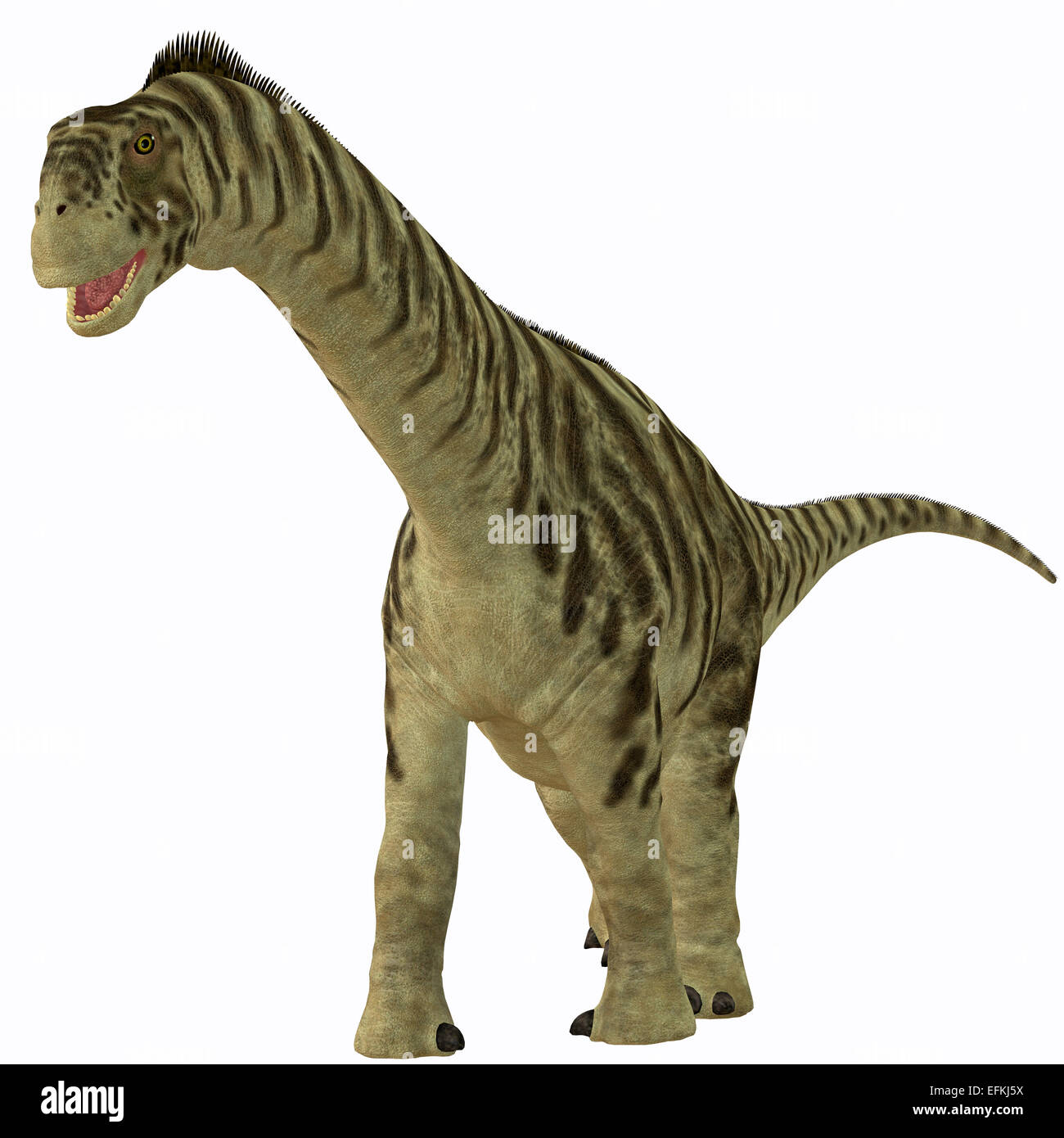 Camarasaurus was a sauropod herbivore dinosaur that lived in the Jurassic Era of North America. - Stock Image