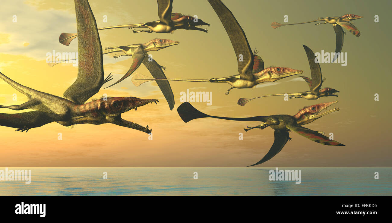 A flock of Eudimorphodon flying reptiles search for fish prey in the Triassic Era. Stock Photo