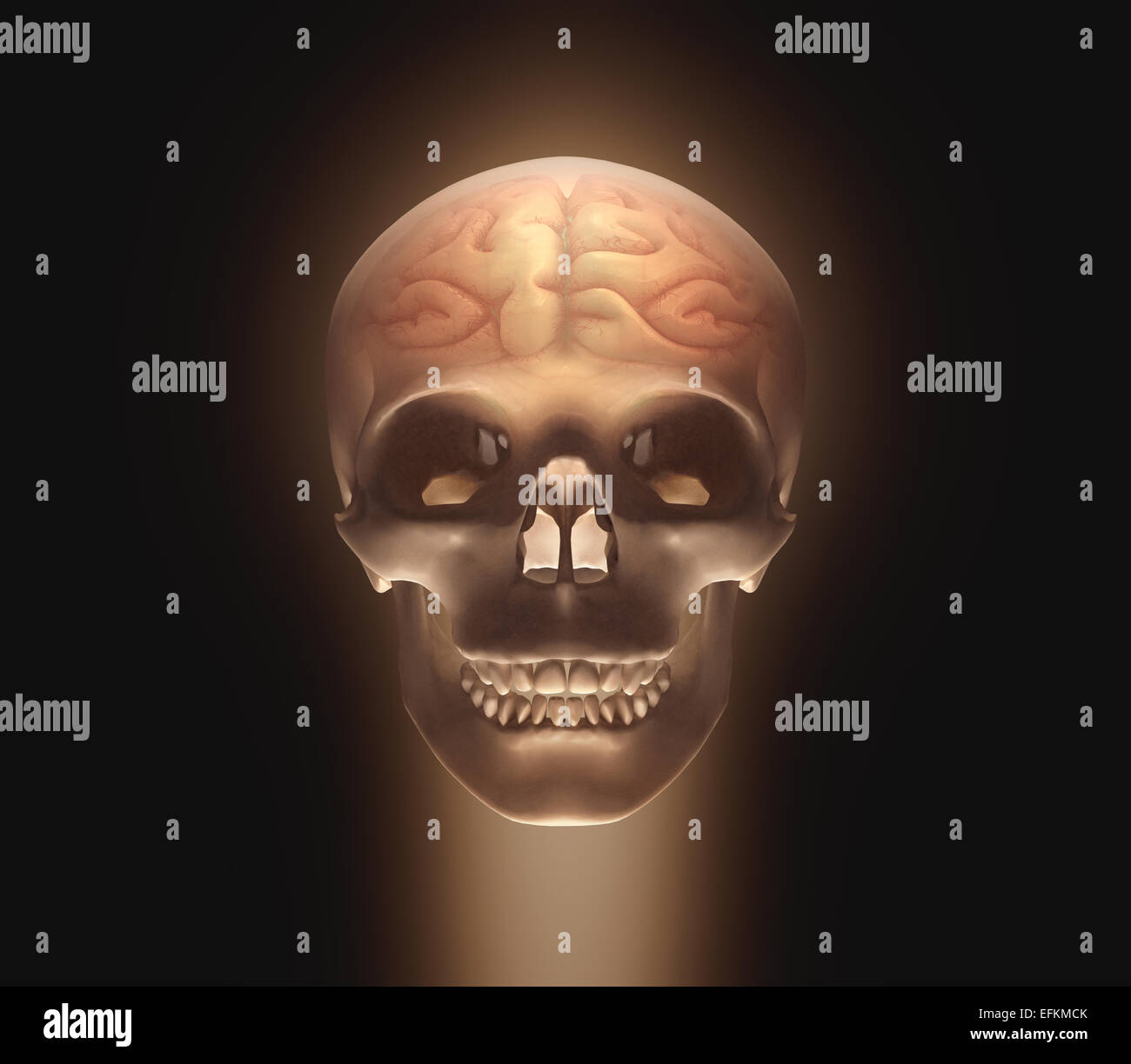 Skull with a brain inside. Clipping path included. - Stock Image