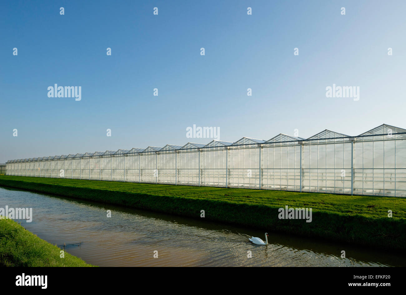 Angled view of canal and row of greenhouses - Stock Image