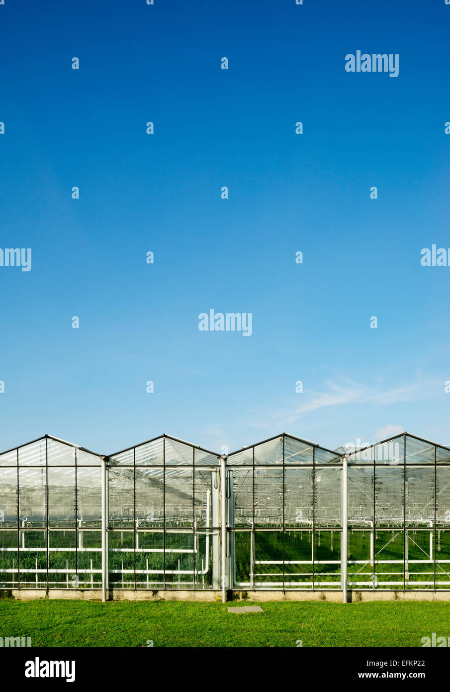 Row of greenhouses and blue sky - Stock Image