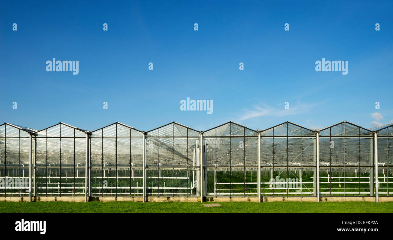 Panoramic view of row of greenhouses and blue sky - Stock Image