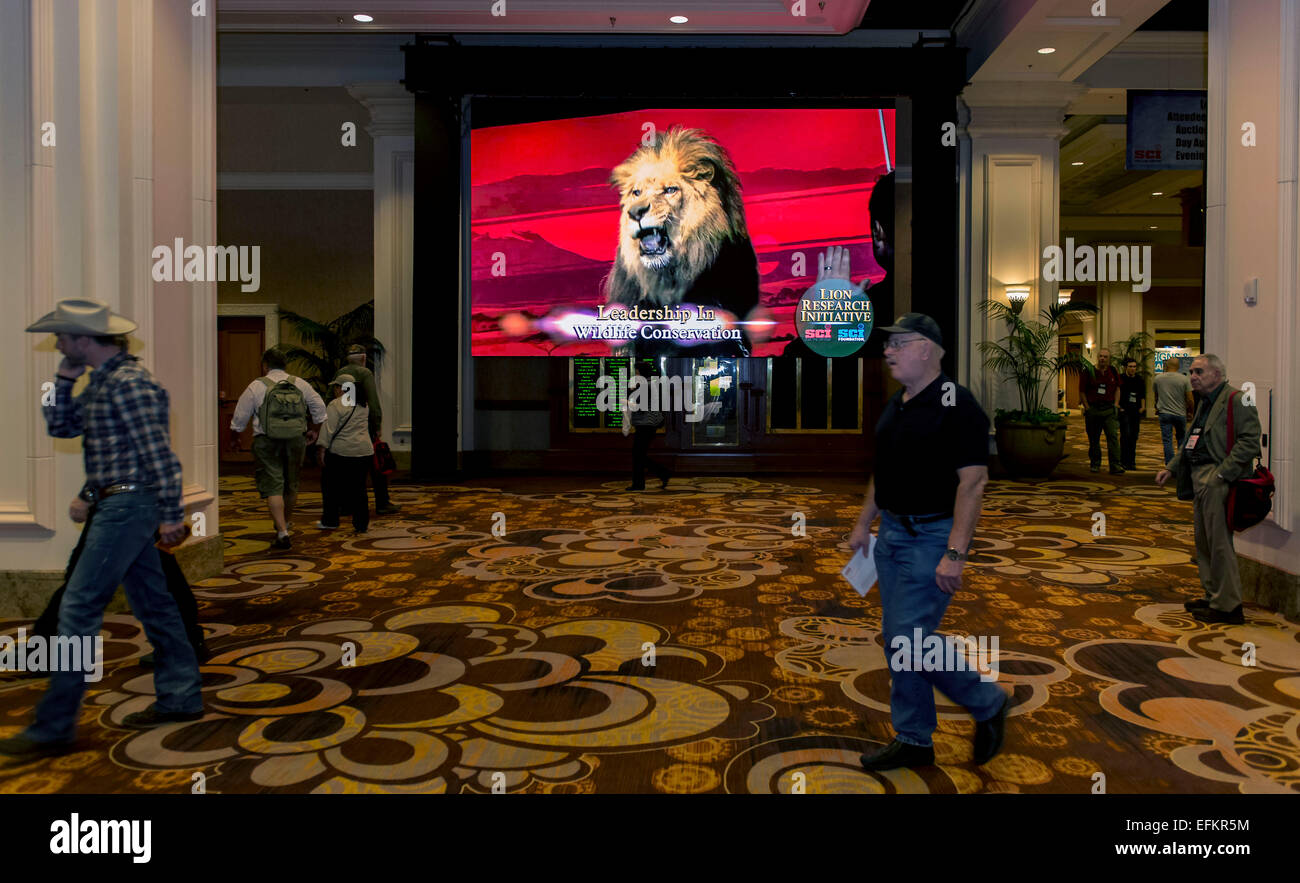 Safari casino club