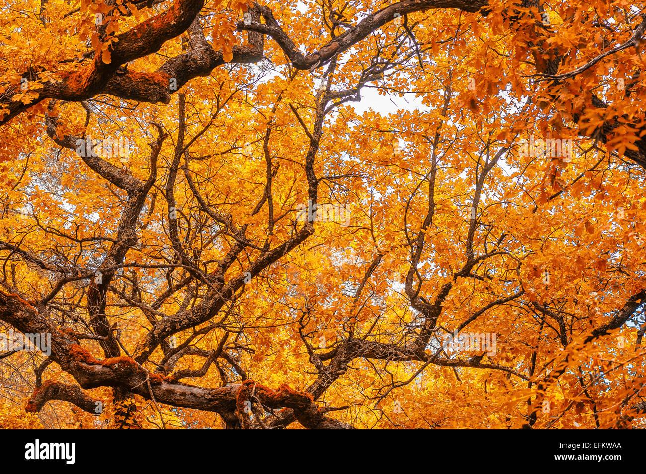 arbres et foret en automne dans la region  de sillans la cascade var france 83 - Stock Image
