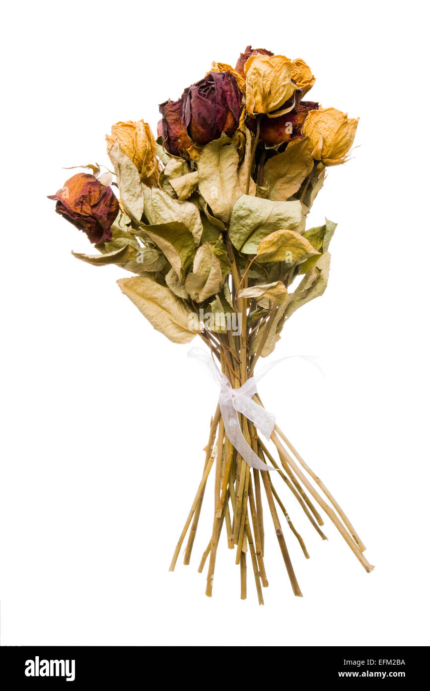 Bouquet of dried flowers cut out stock images pictures alamy dried rose bouquet stock image izmirmasajfo