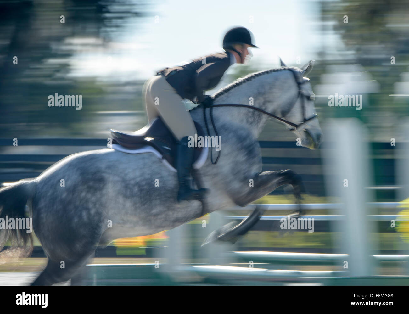 Show jumping competition - Stock Image