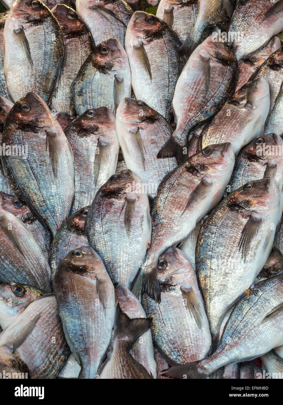 Mediterranean Sea Bream at the fish market on Karakoy waterfront, Beyoglu,  Istanbul, Turkey. Stock Photo