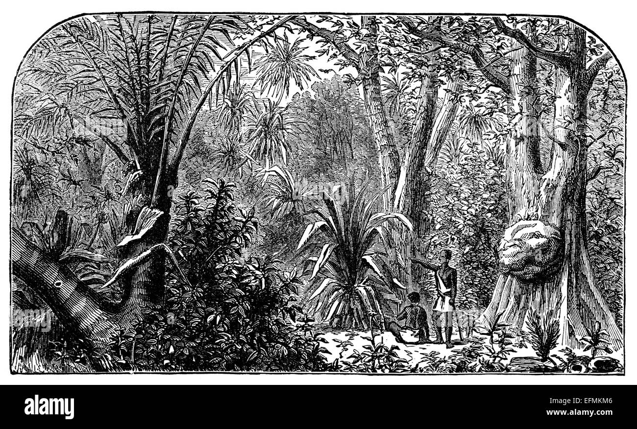 19th century engraving of people in jungle in the amazon brazil stock image