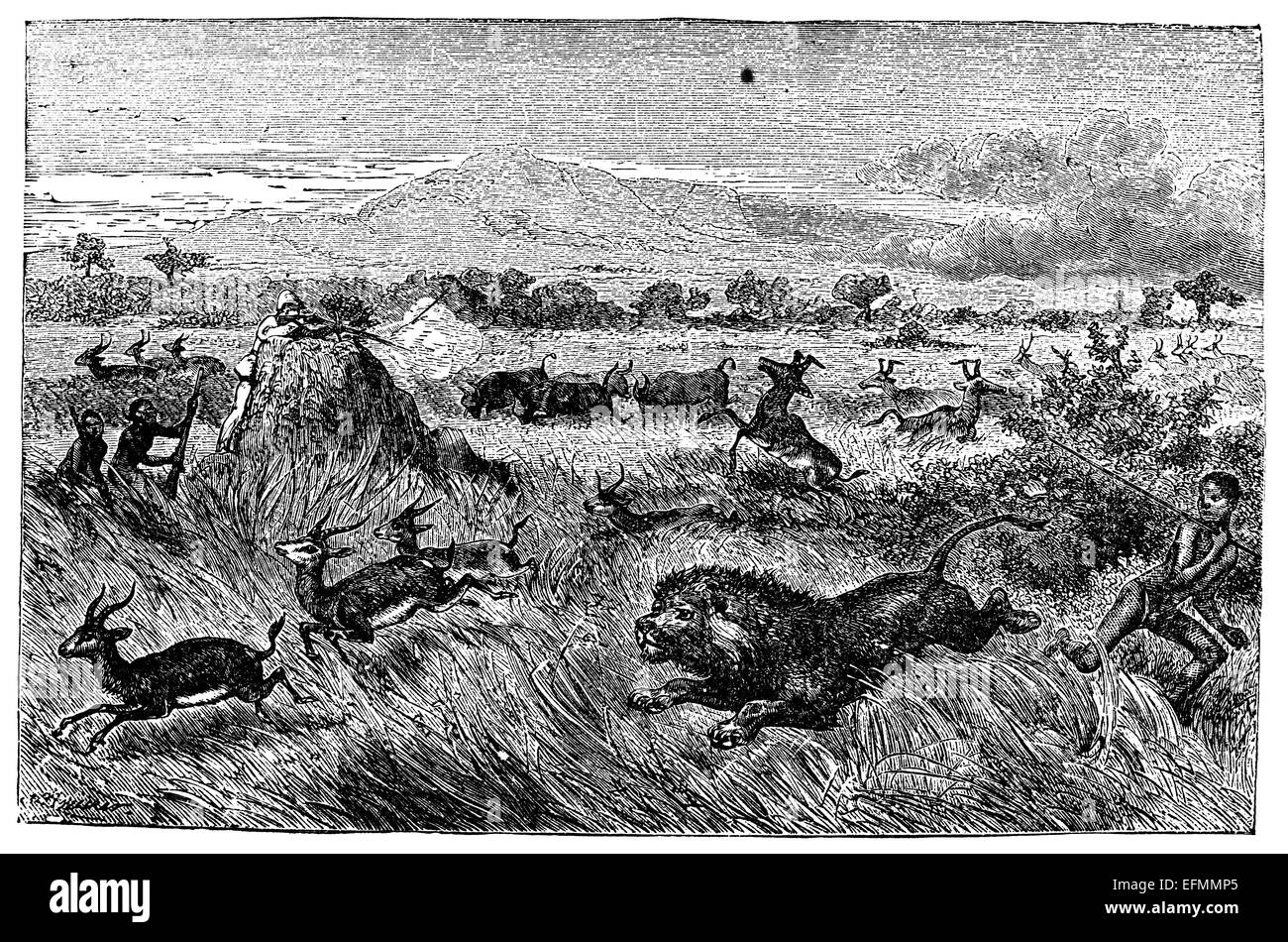 19th century engraving of game hunting gazelle, antelope, lion on the savannah in Africa - Stock Image