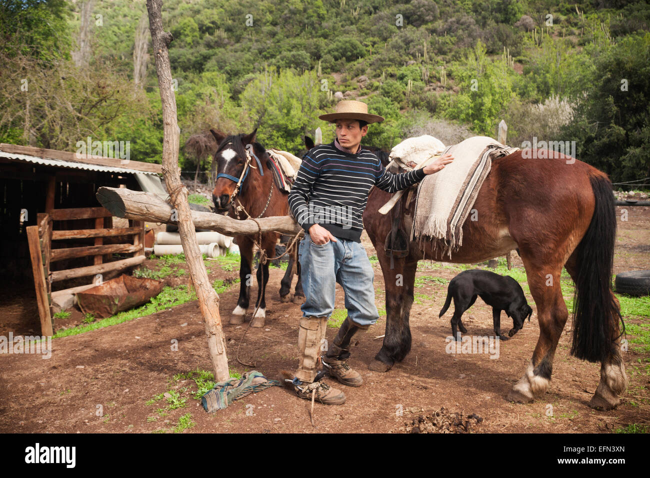 Chilean cowboy leans against his horse on a ranch in El Toyo region of Cajon del Maipo, Chile, South America - Stock Image