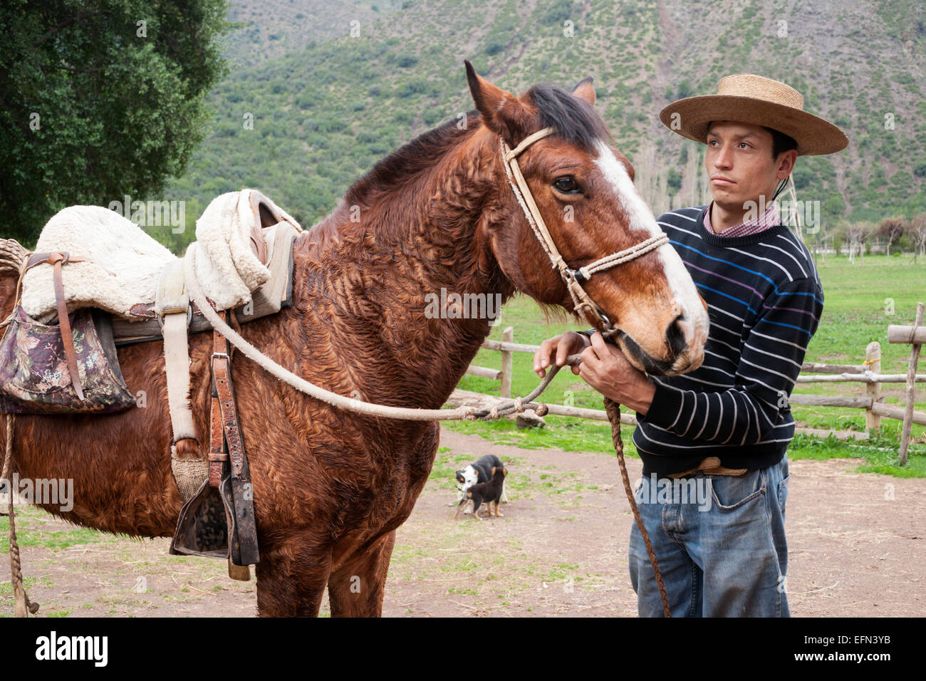 Chilean cowboy adjusts the reins on his horse on a ranch in El Toyo region of Cajon del Maipo, Chile, South America - Stock Image