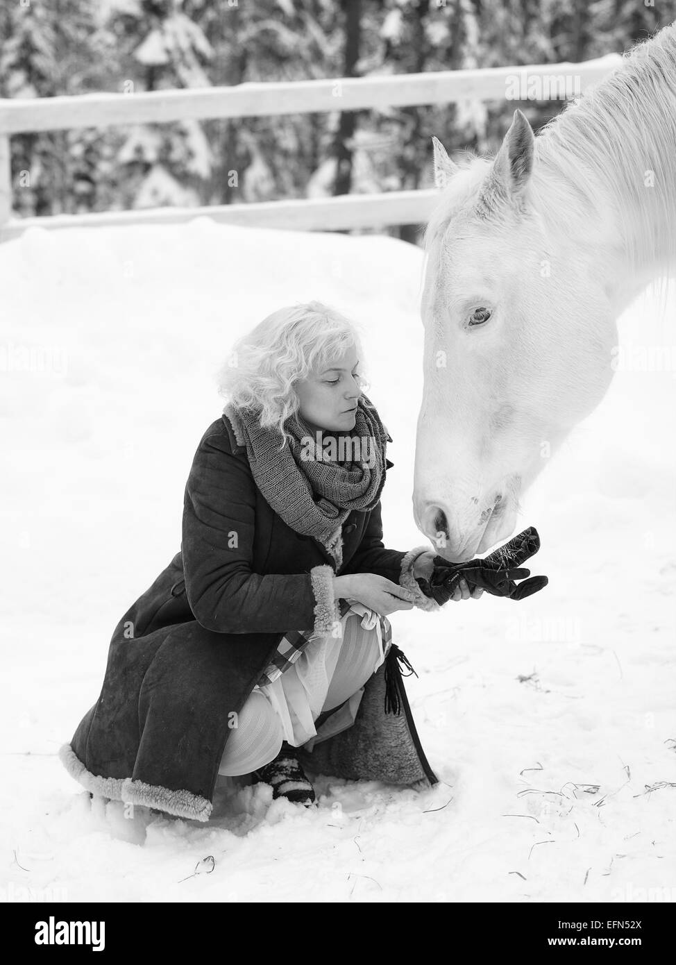 Attractive blond woman feeds a white horse, overcast winter day, black and white image - Stock Image