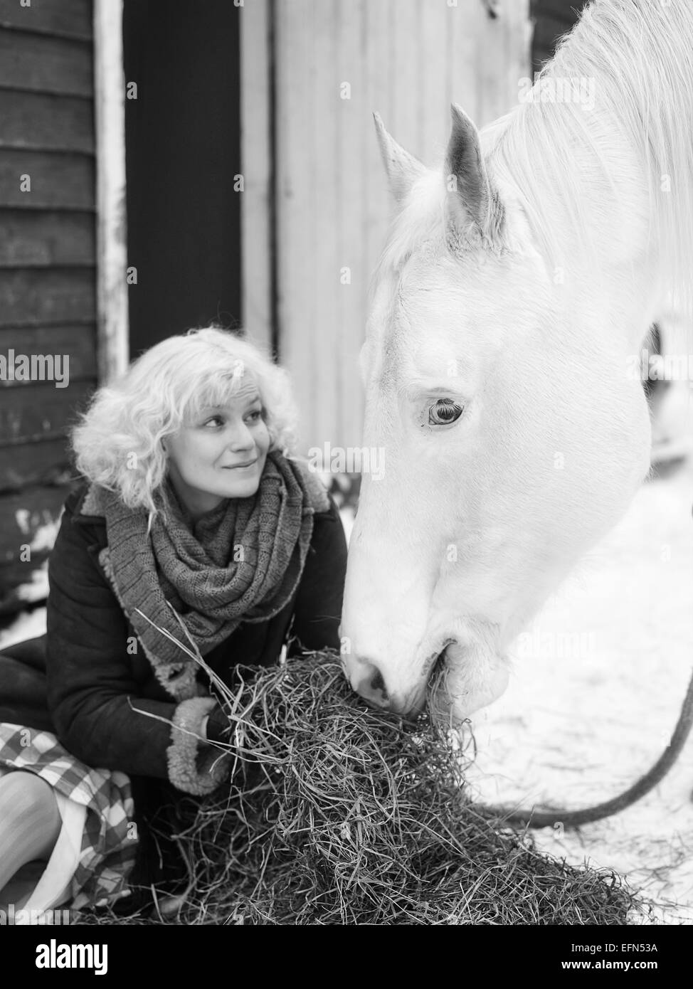 Attractive blond woman feeds a white horse, overcast winter day, black and white image, focus on horse eyes - Stock Image