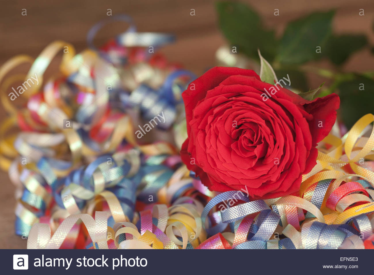 Red cut rose and streamers - Stock Image