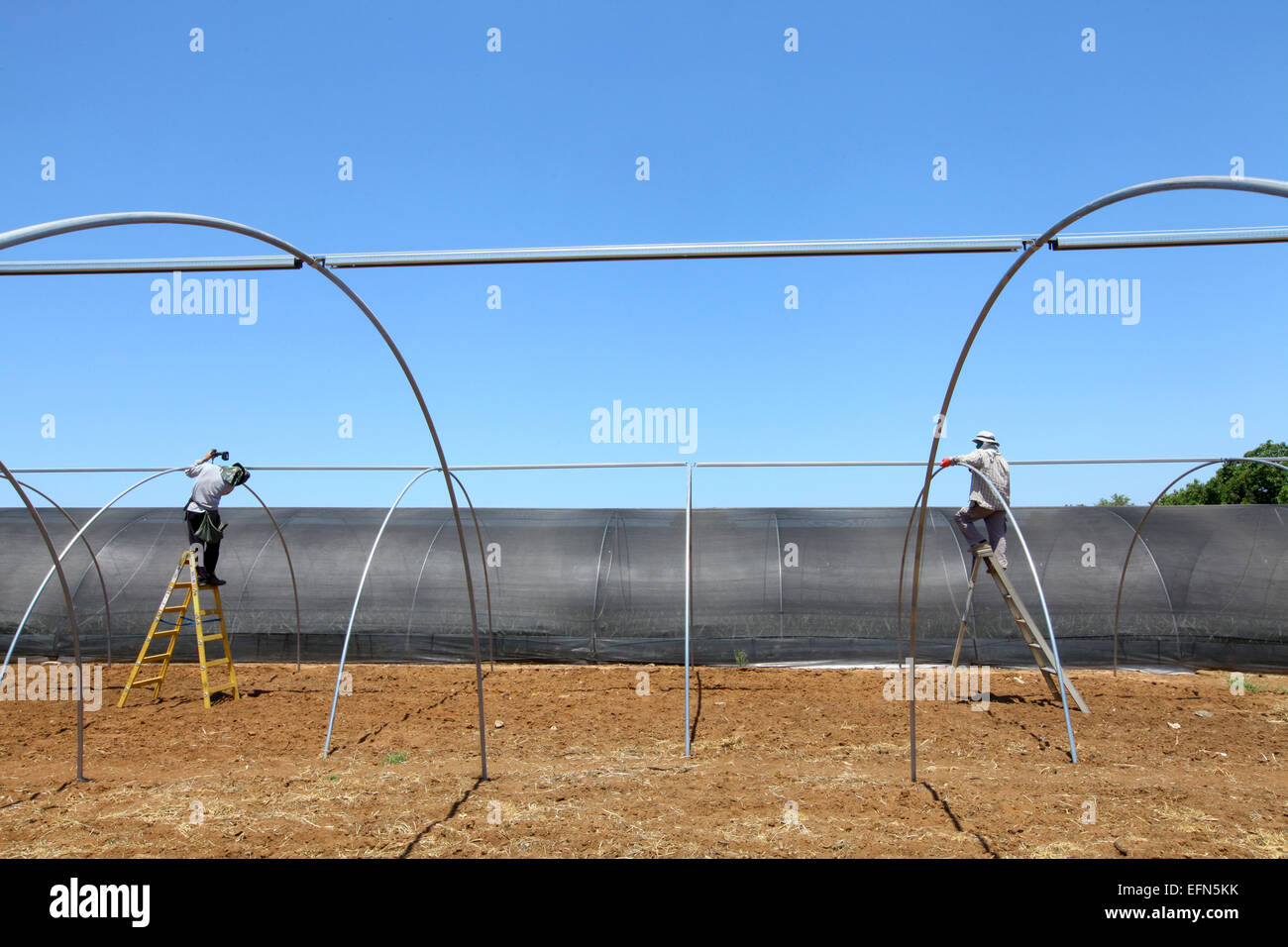 Migrant workers build a greenhouse in Israel, Emek Hefer - Stock Image