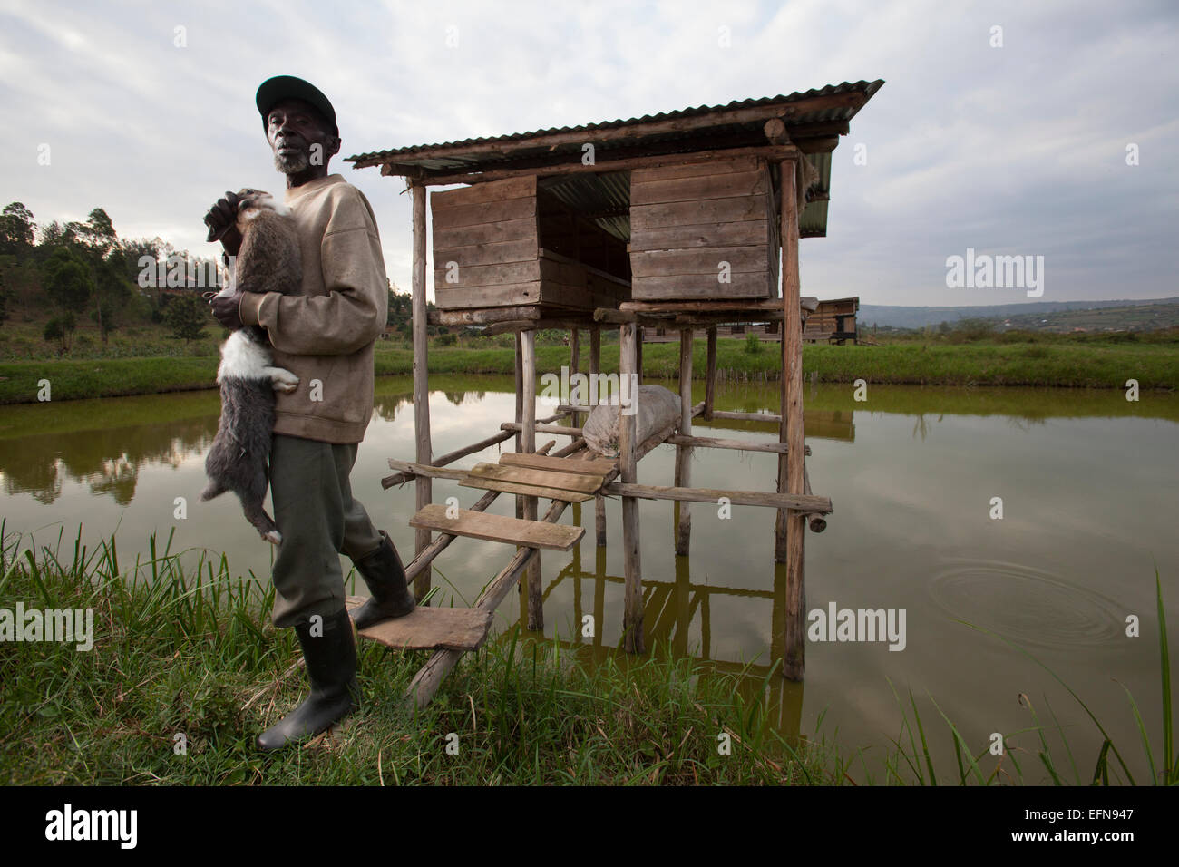 Rwandan farmers show off domestic rabbits outside their hutches which sit over a fishpond, Rwanda - Stock Image