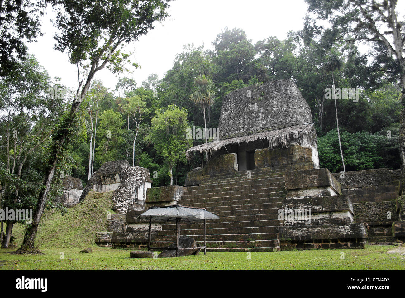 Mayan Temple In Tikal National Park - Stock Image