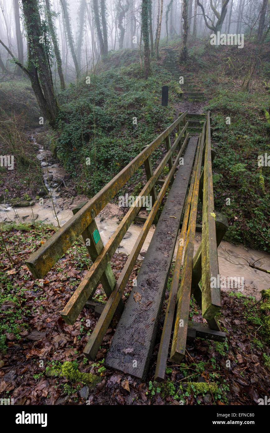 A wooden footbridge over a stream in Tom Wood, Derbyshire on a misty winter morning. - Stock Image