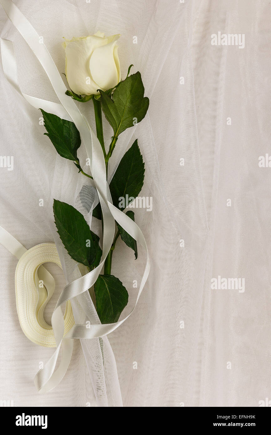 Beige rose and ribbon on a white tulle Stock Photo