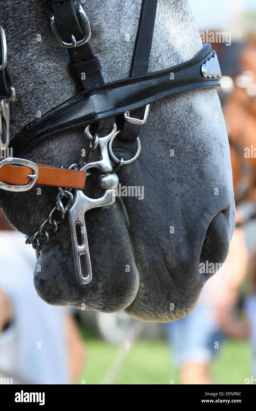 Harness on a work horse. Canfield Fair. Mahoning County Fair. Canfield, Youngstown, Ohio, USA. - Stock Image