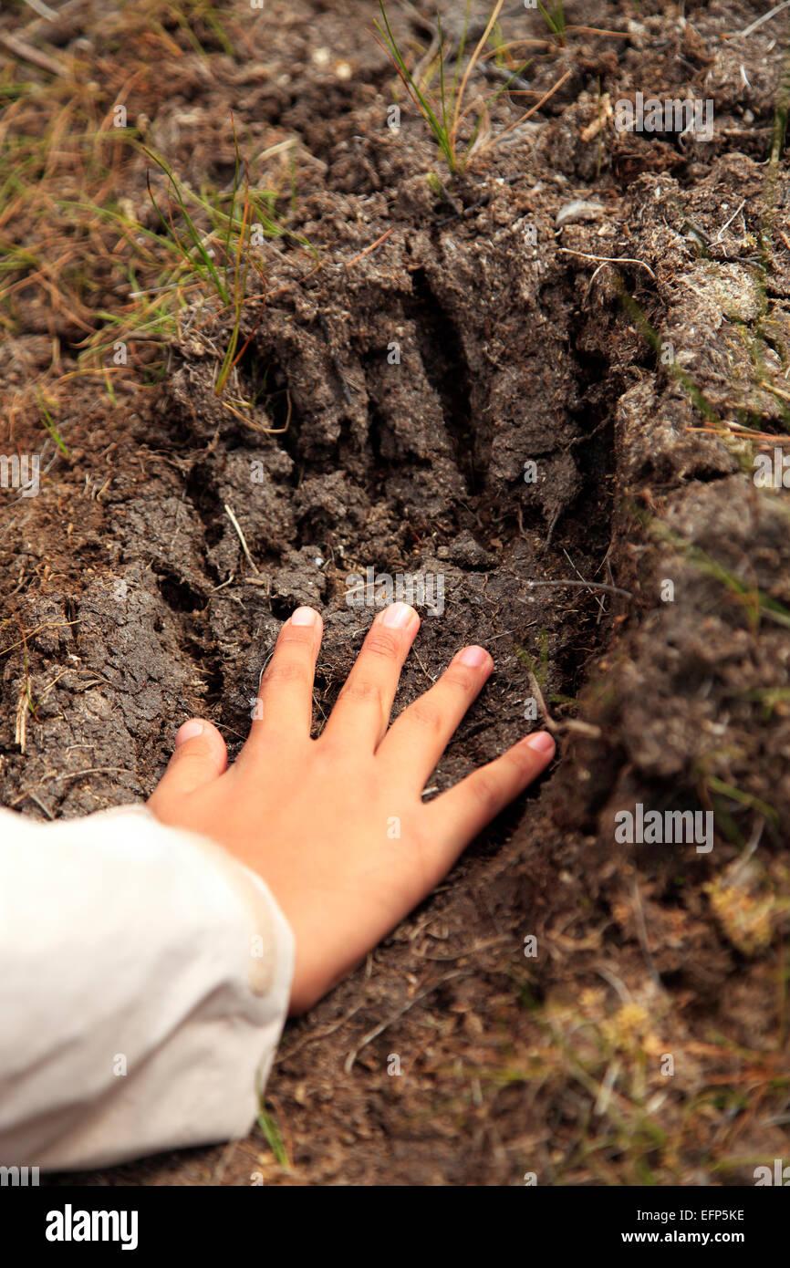 Human hand and bear's trace, Opala river, Kamchatka Peninsula, Russia - Stock Image