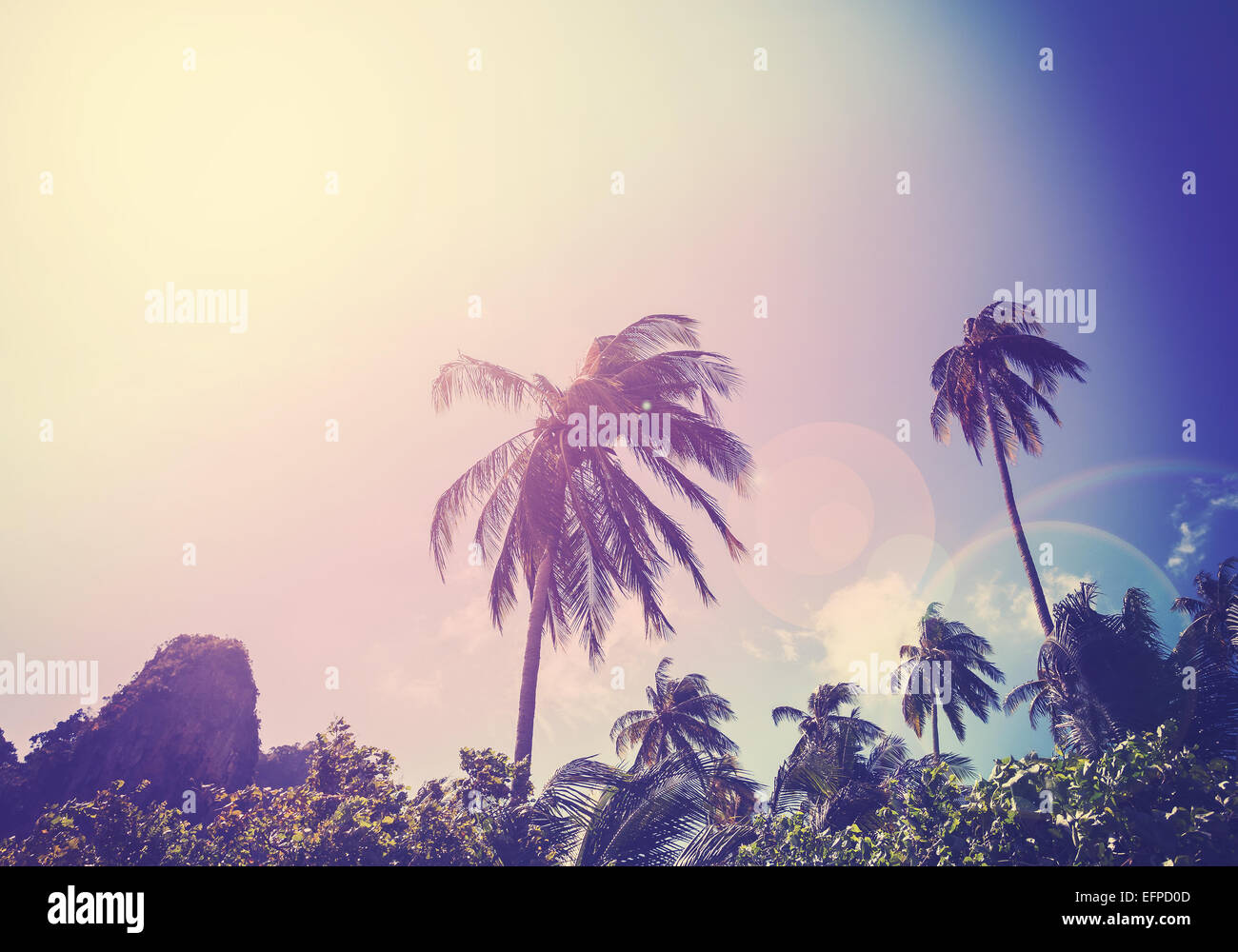 Vintage filtered picture of faded palms with flare effect. - Stock Image