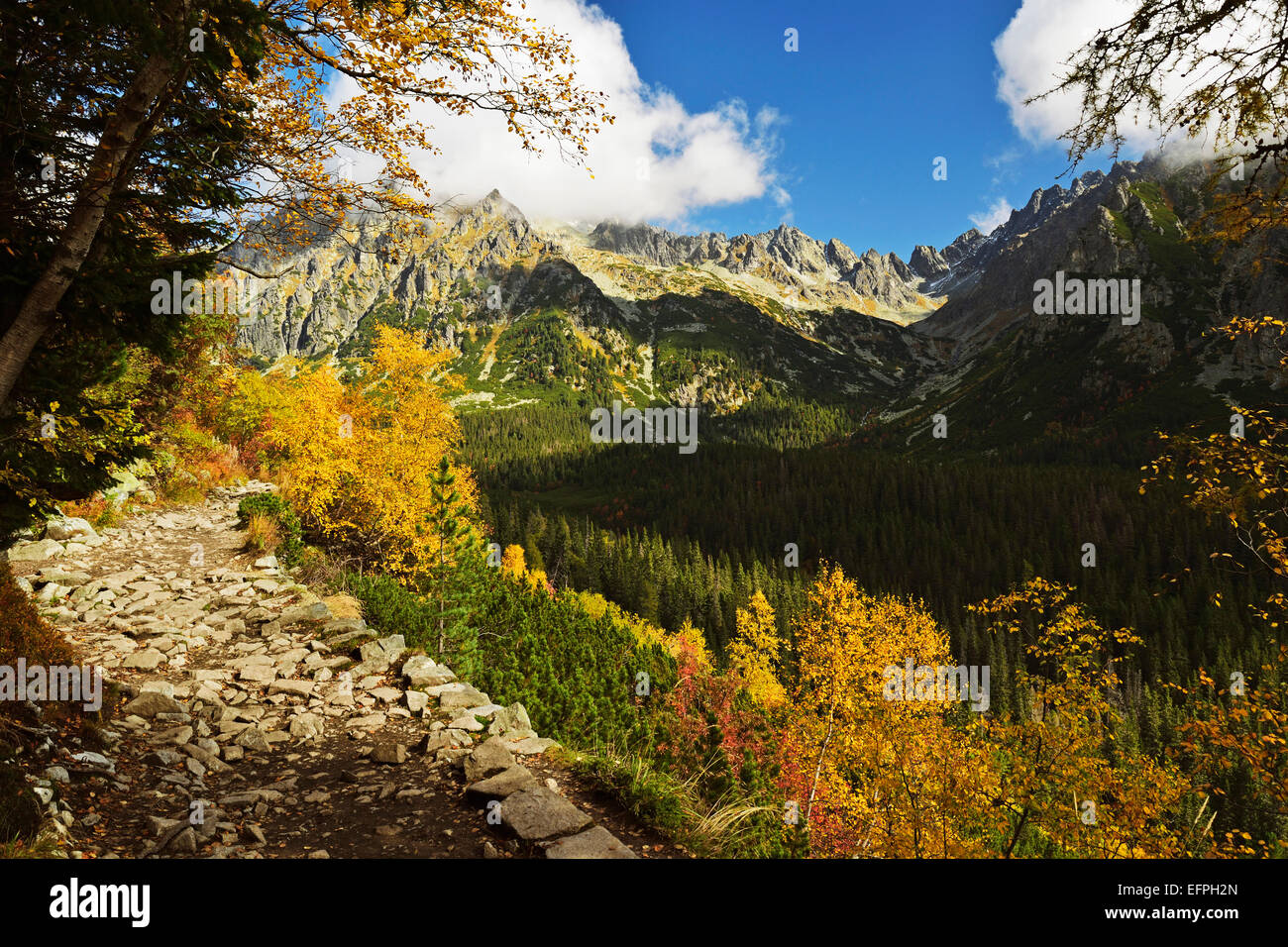 Footpath in the Strbske Pleso area, High Tatras (Vysoke Tatry), Slovakia, Europe - Stock Image