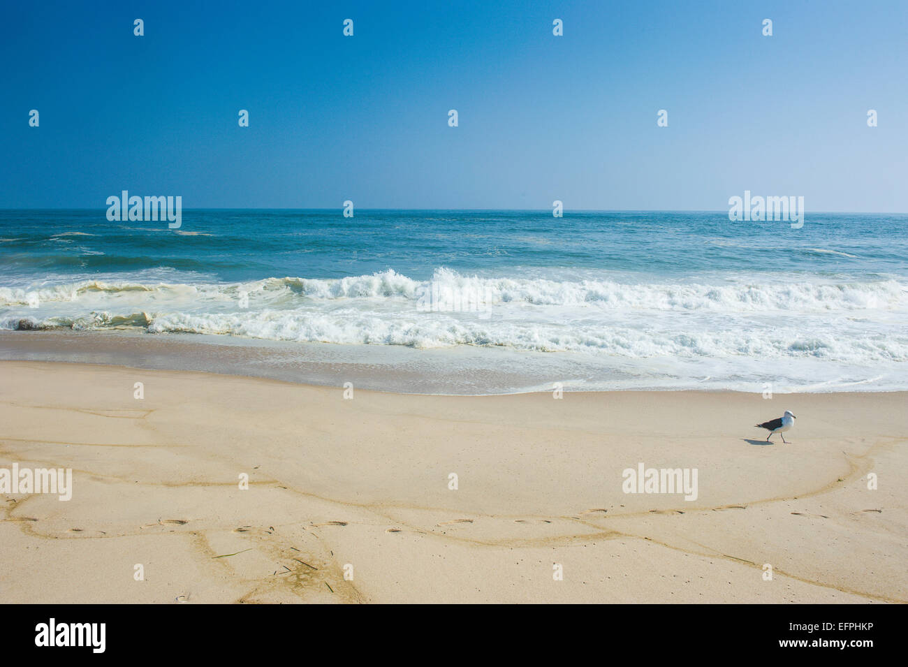 Long sandy beach in the Hamptons, Long Island, New York State, United States of America, North America - Stock Image