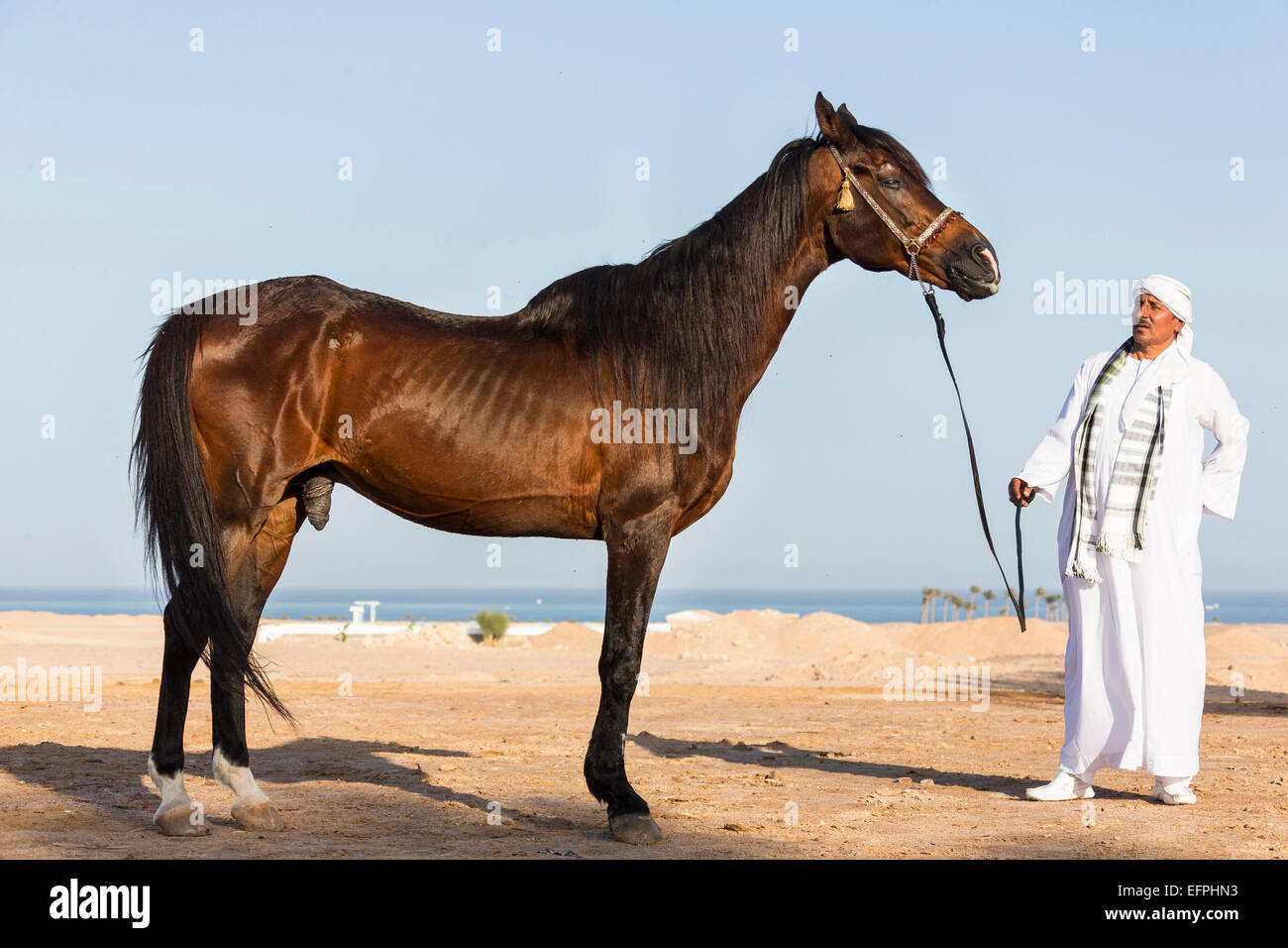 Old Man With Horse High Resolution Stock Photography And Images Alamy