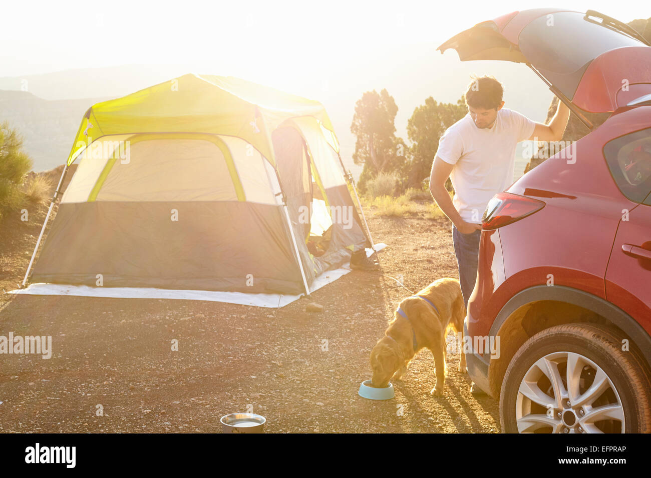 Camping Tent Dog Stock Photos & Camping Tent Dog Stock ...