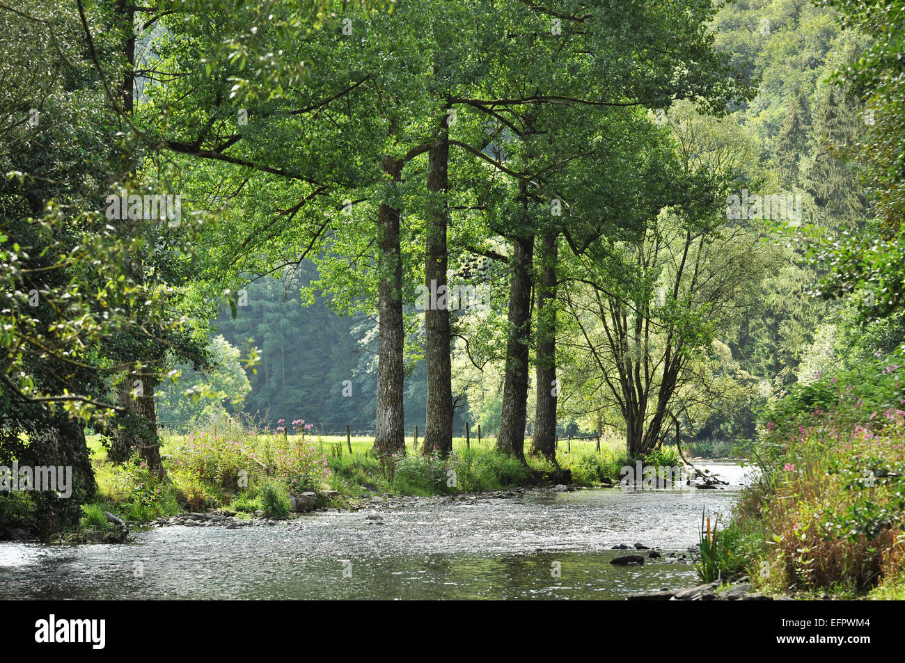 The Ambleve a river in the Ardennes of Belgium - Stock Image