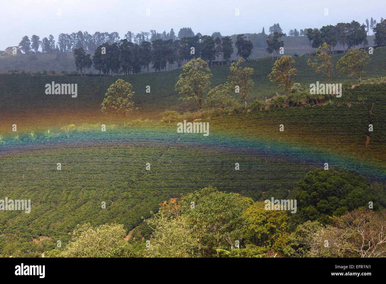Coffee plantation and rainbow. Poas Volcano. Costa Rica. Central America - Stock Image