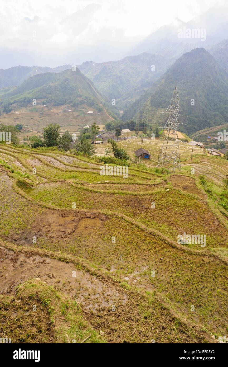 Rice fields on terraced of  Cat Cat Village, Sapa Vietnam. - Stock Image