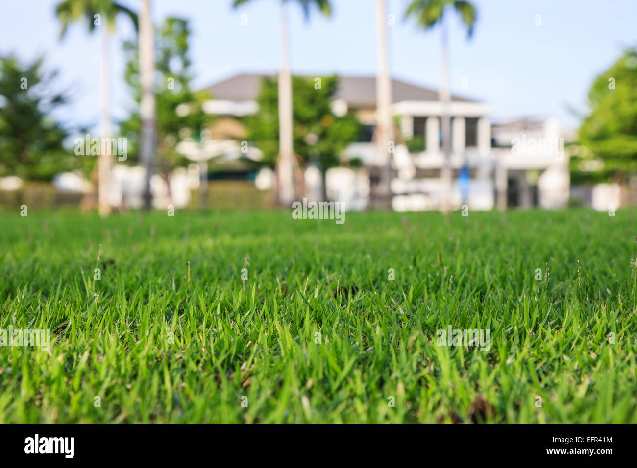 modern dream house behind the green field - Stock Image
