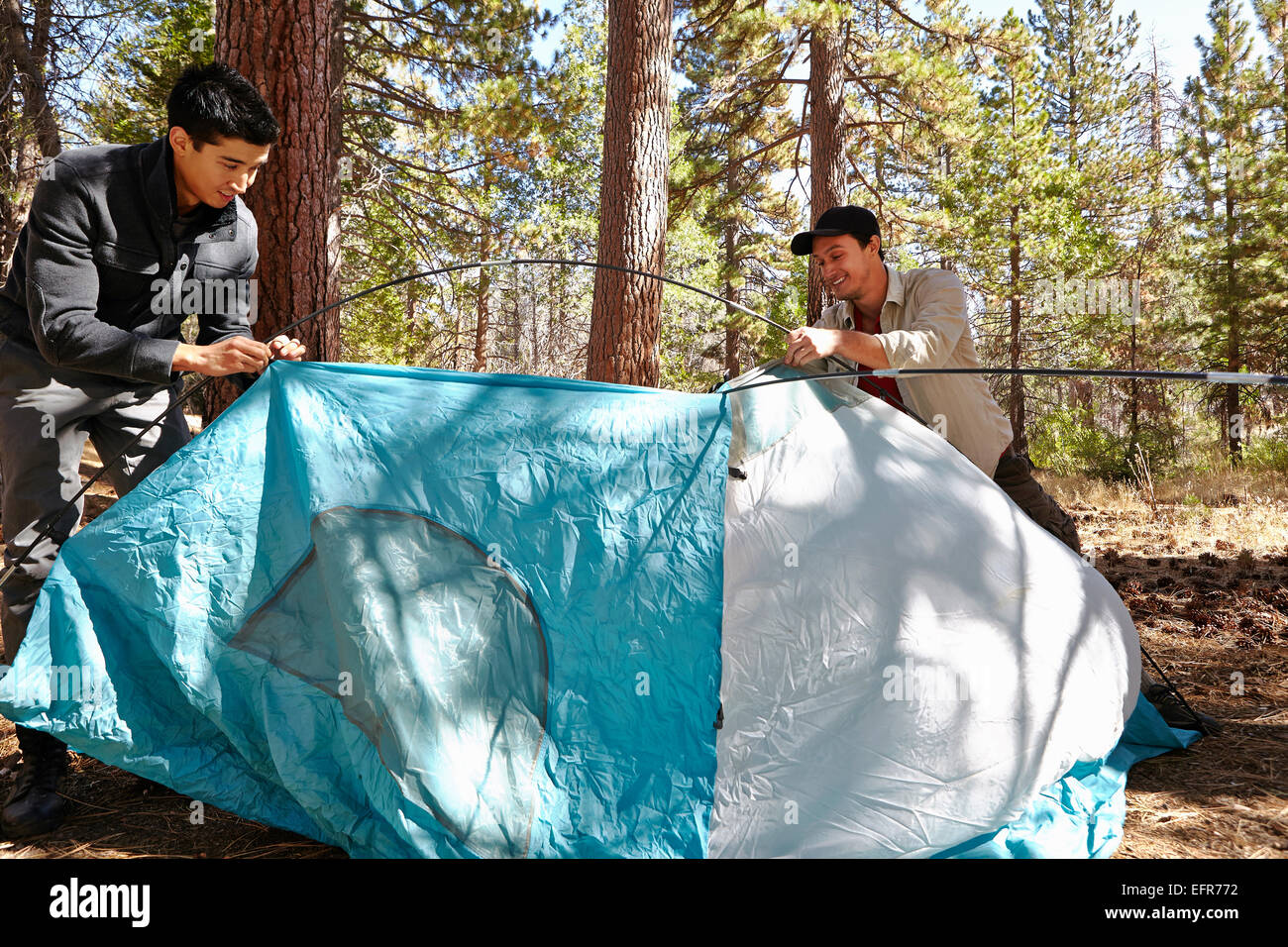 Two young men putting up tent in forest, Los Angeles, California, USA - Stock Image