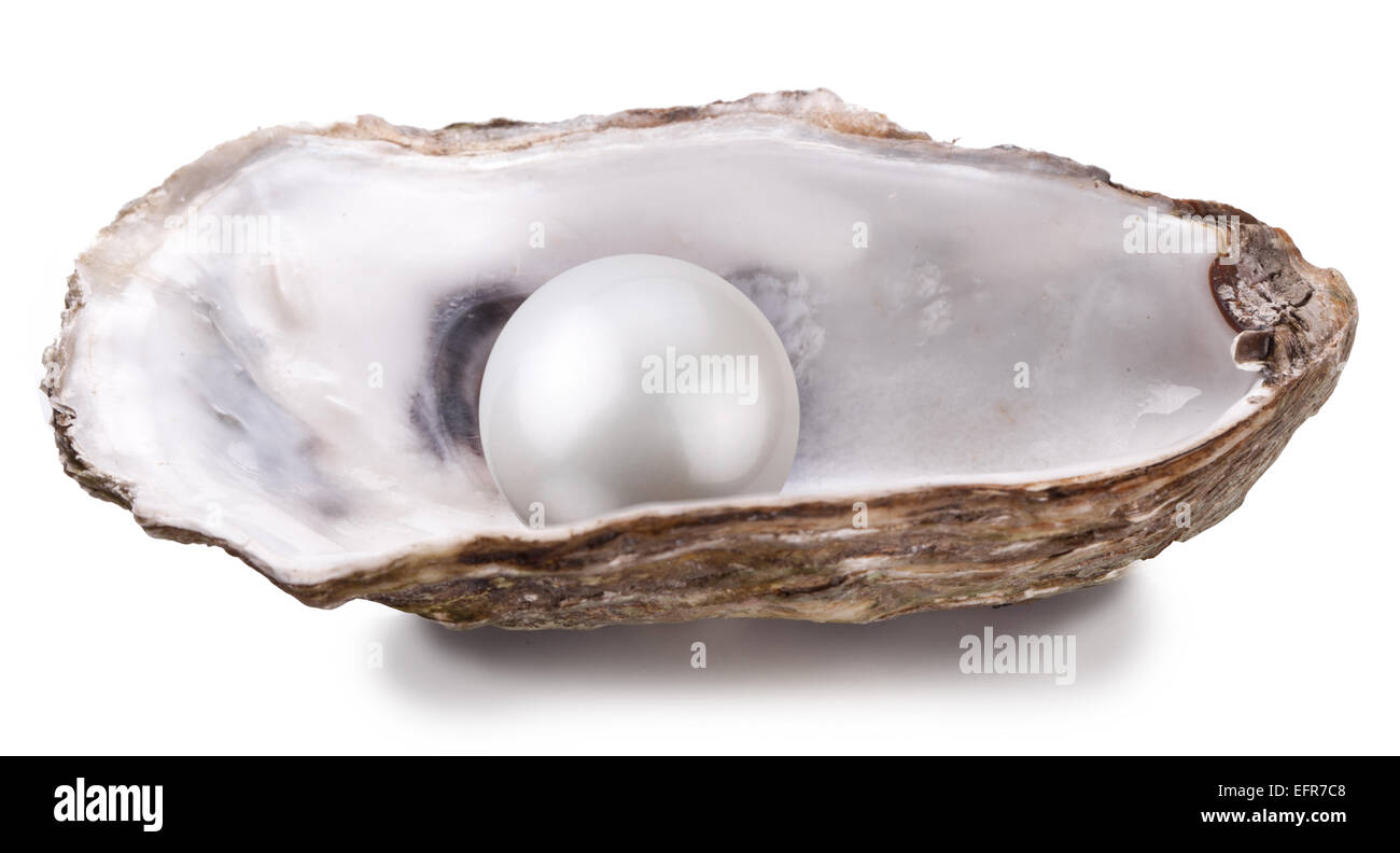 Open oyster with pearl isolated on white background. - Stock Image