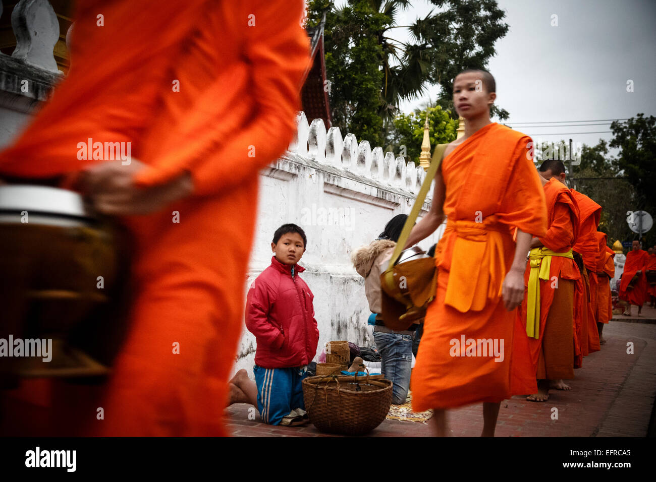 Monks collecting alms at sunrise, Luang Prabang, Laos. - Stock Image