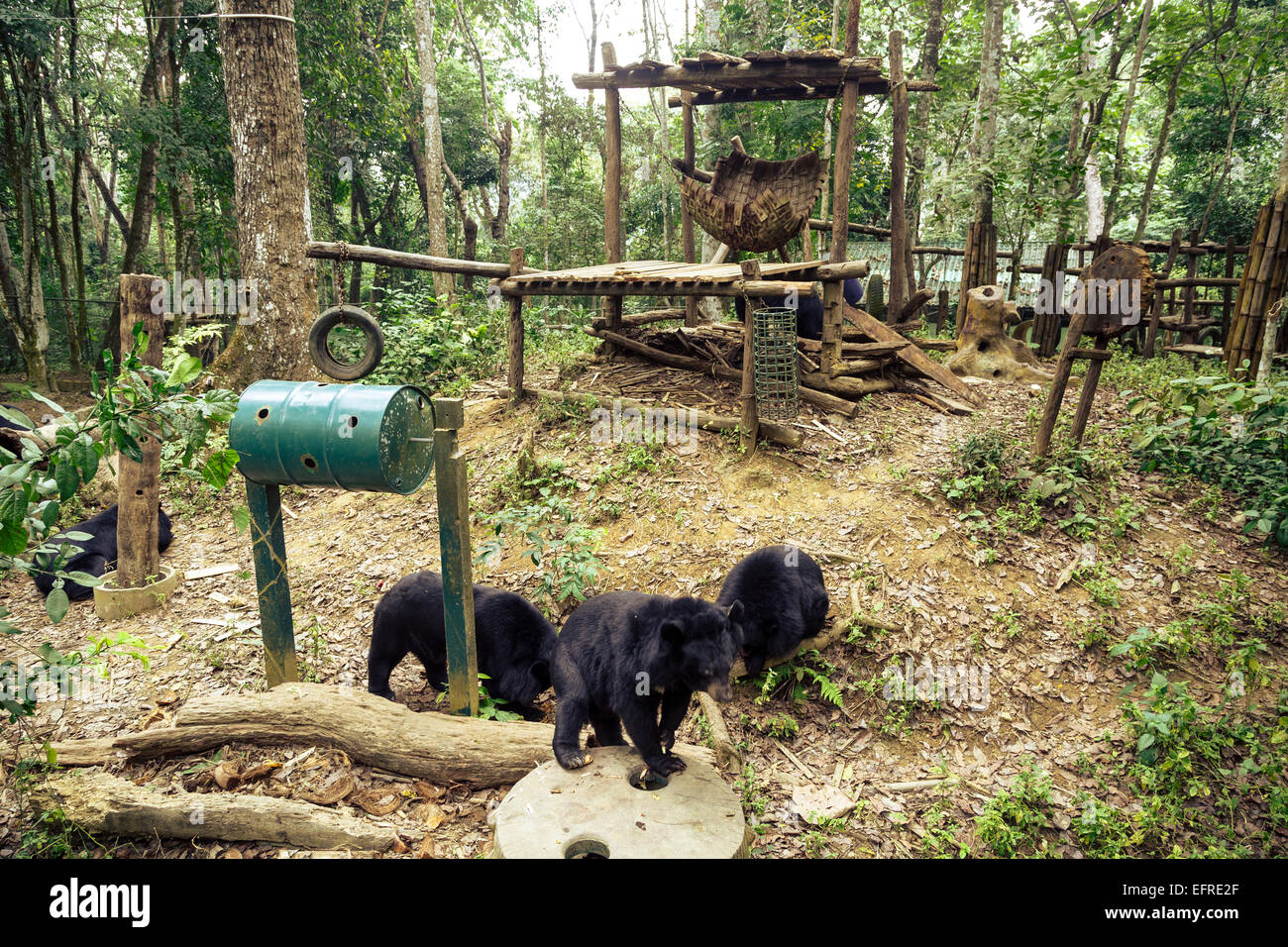 Moon bears at Tat Kuang Si Bear Rescue Centre, Luang Prabang, Laos. - Stock Image